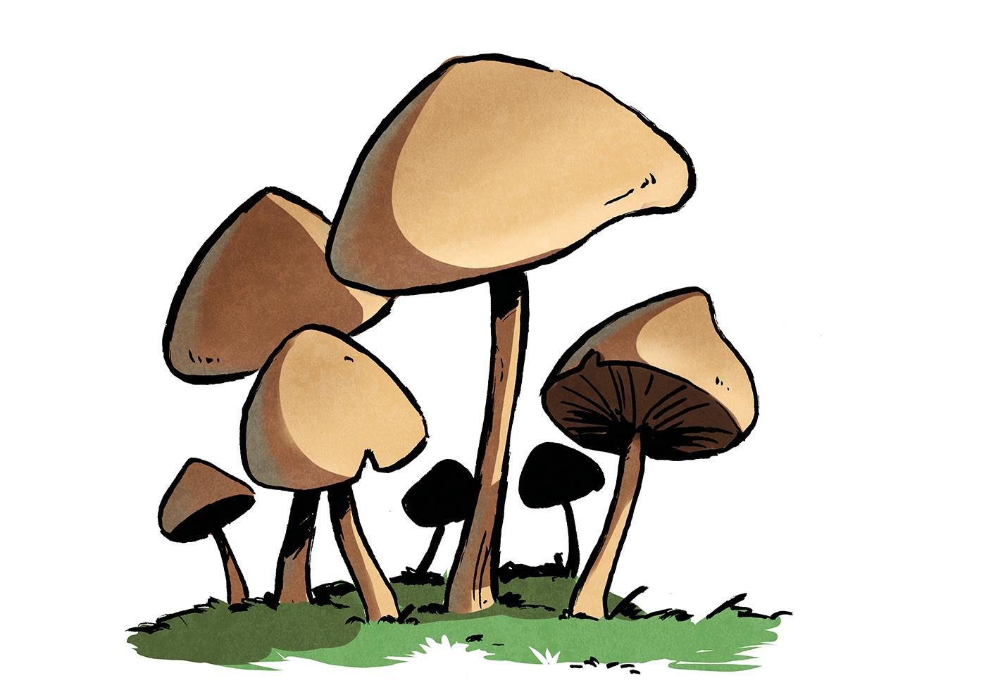 Champignon saprophytes sol terre forêt biologie